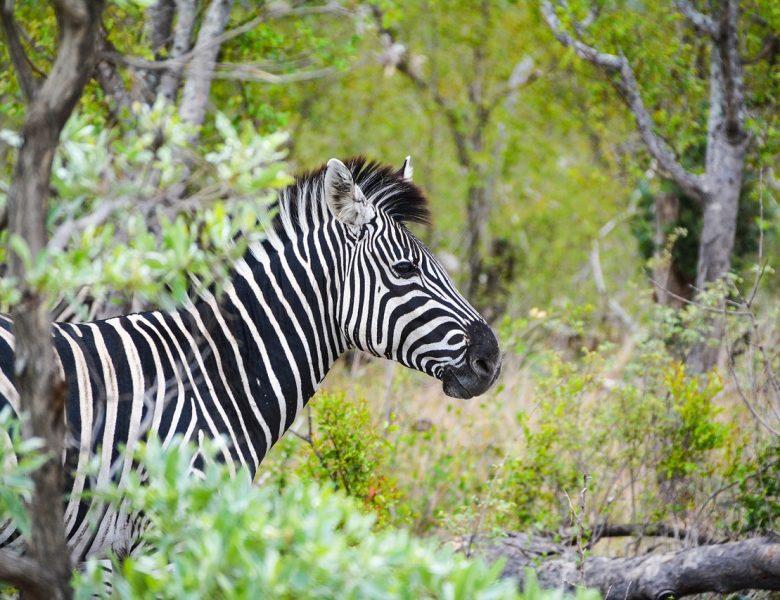 Afrique du Sud: découvrir sa nature à travers ses plus grands parcs